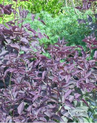 Foliage May and June