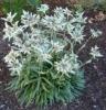 September 28 2009, same plant