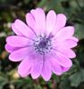 A mature flower