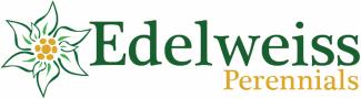 Edelweiss Perennials